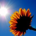 5 Ways to Feel Better Through Feeling : Ann Bibbey Blog